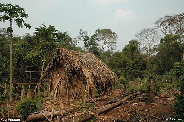 Cuộc sống cô độc suốt 22 năm của thành viên cuối cùng trong một bộ lạc Amazon - 2