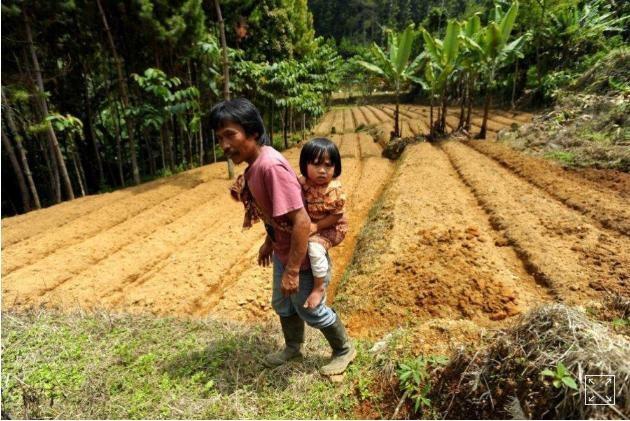 Bảo tồn rừng để cải thiện chế độ ăn của trẻ em - Ảnh 1.