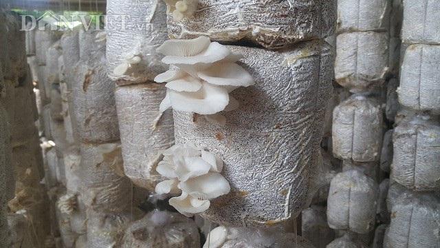 Nhờ trồng nấm bào ngư mà mỗi tháng gia đình chị Huyền bỏ túi đều đặn 20 triệu/tháng.