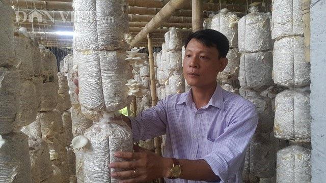 Anh Trần Tuấn Hữu - Chủ tịch Hội Nông dân xã Hải Tây đang dẫn phóng viên báo Dân Việt đi thăm quan mô hình trồng nấm bào ngư của gia đình chị Huyền.