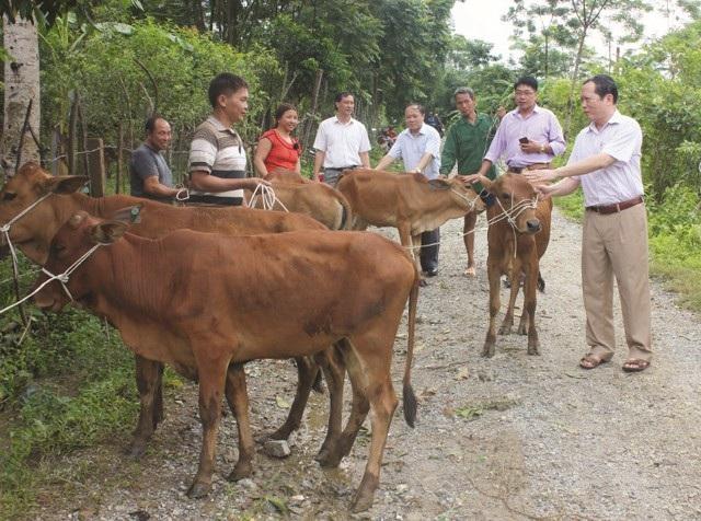 Ông Lương Thanh Hải - Trưởng ban Dân tộc tỉnh Nghệ An (người ngoài cùng bìa phải) trao bò giống hỗ trợ sinh kế cho người nghèo miền núi (ảnh Vân Anh)