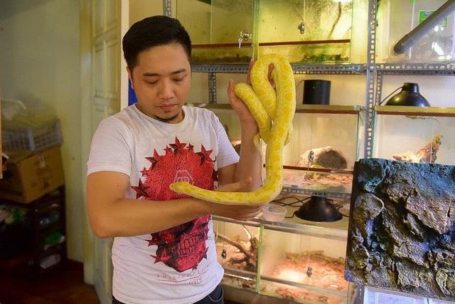 Trăn, rắn cảnh khá dễ nuôi và chăm sóc. Mỗi tuần chúng ăn một lần, thức ăn là thịt động vật như: chuột bao tử…