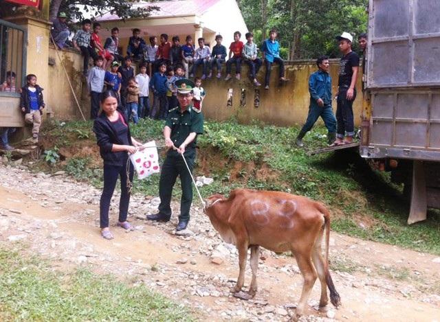 Hơn 3.600 con bò giống đã được trao tận tay, tạo sinh kế phát triển kinh tế, xóa đói giảm nghèo cho đồng bào vùng biên giới