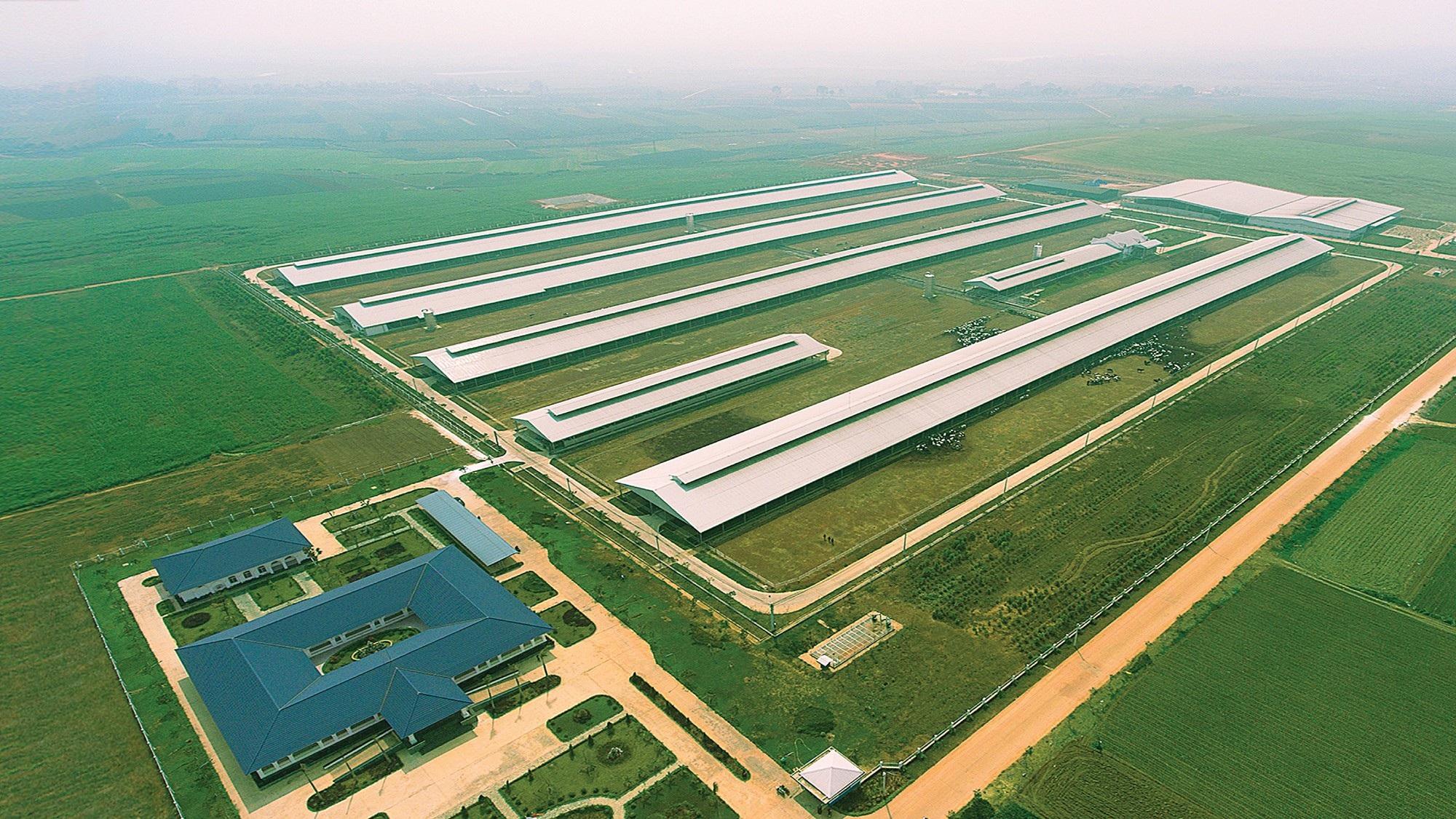 Tổ hợp trang trại bò sữa công nghệ cao Vinamilk tại Thanh Hóa