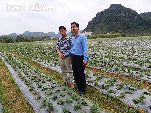 Anh Bùi Quý Hợi (bên trái) đang dẫn khách thăm quan mô hình trồng cây cà gai lep của mình.