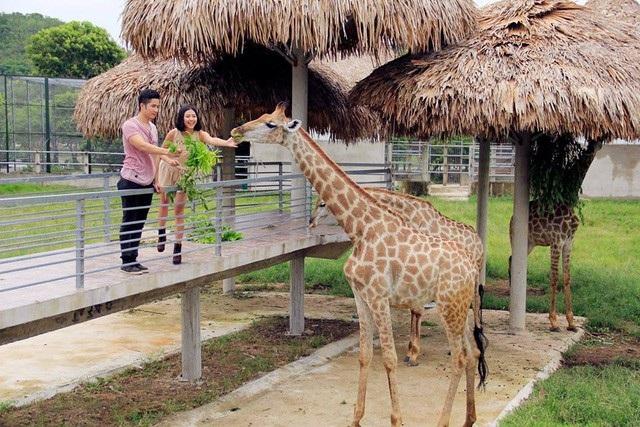 Vườn thú của khu du lịch sinh thái đa dạng các loại động vật