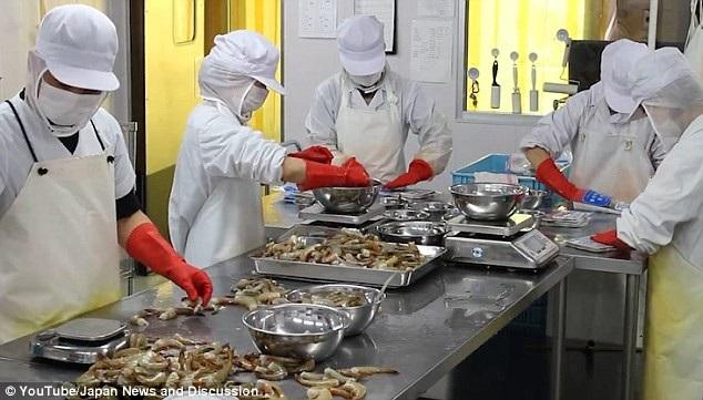Nhân viên công ty chế biến tôm ở Nhật bản được tự chủ thời gian làm việc.