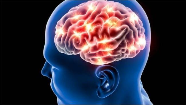 Khám phá hành trình của một bộ não sau khi được hiến tặng cho khoa học - Ảnh 1.
