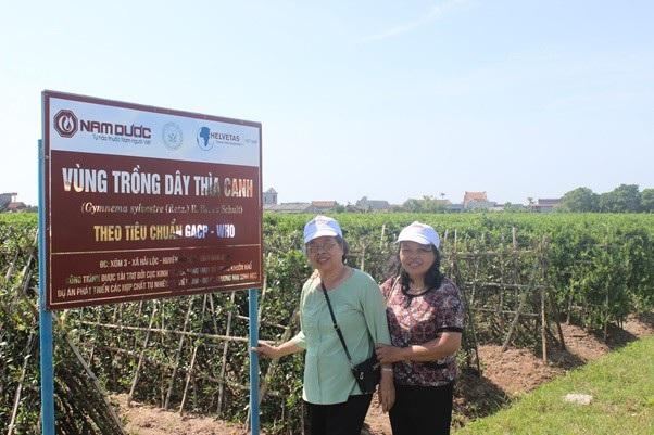 Vùng trồng Dây thìa canh chuẩn hóa GACP-WHO để sản xuất TPBVSK Diabetna ở Hải Hậu – Nam Định
