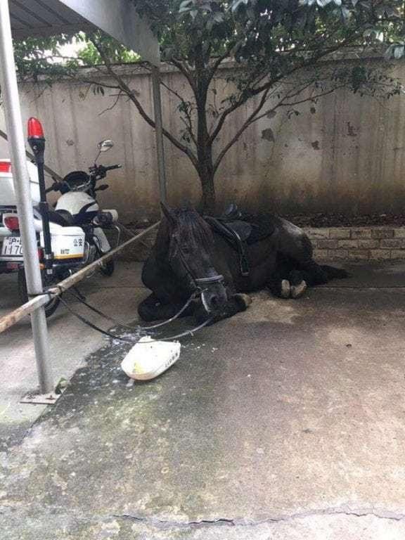 Cô gái bị bắt giữ tại đồn cảnh sát và chú ngựa bị cột ở bên ngoài đồn