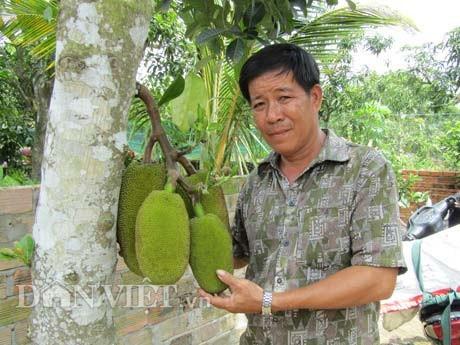 Ông Nguyễn Thanh Sơn bên cây mít đầu dòng mà ông gọi là cây mít nái.