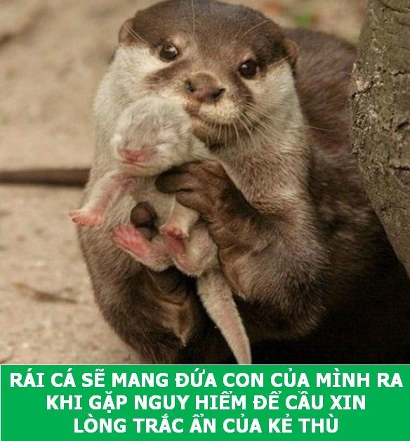 """Những sự thật """"tan chảy"""" khiến bạn thêm yêu các loài sinh vật này! - 3"""