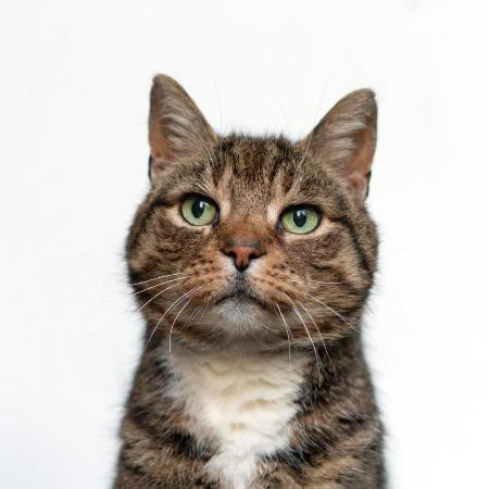 Con mèo đã nhiễm vi khuẩn Francisella Tularensis mà người chủ không hề hay biết