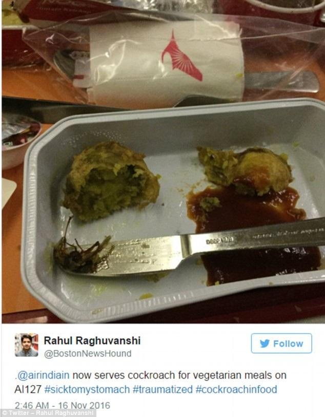 Trước đó, một vị khách Ấn Độ giật mình khi nhìn thấy xác gián chết trong phần ăn của mình, sau khi đã dùng hết nửa suất