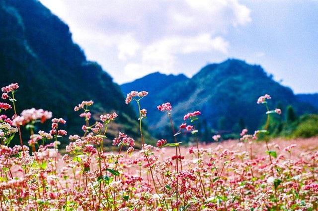 Những cánh hoa nhỏ li ti, mỏng manh là vậy mà lại có sức hút lạ kỳ.