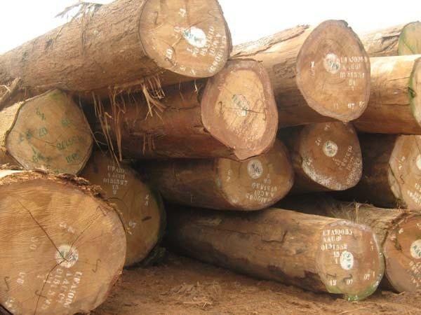 Gỗ lim nhập khẩu từ Cameroon. (Ảnh minh hoạ)