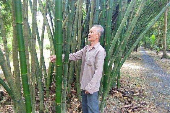 Ông Đặng Văn Sang, xã Thạnh Hòa, huyện Phụng Hiệp, tỉnh Hậu Giang đang giới thiệu về một bờ tre mà ông đang chăm sóc.