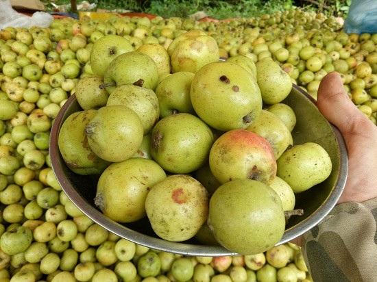 Ở nơi heo hút, trai trẻ vẫn sống khỏe nhờ trồng táo mèo - 5