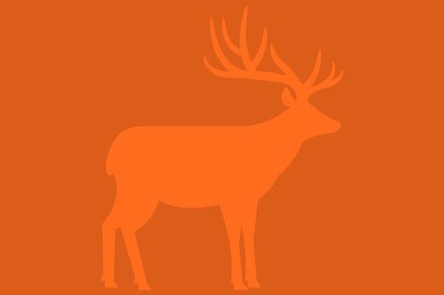 Thử tài tinh mắt: Bạn nhìn thấy con vật nào trong hình? - 3