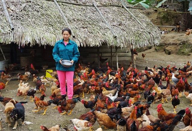 Người nghèo được hỗ trợ nguồn vốn vay ưu đãi để phát triển kinh tế theo hướng chăn nuôi, trồng trọt, phù hợp với điều kiện tự nhiên