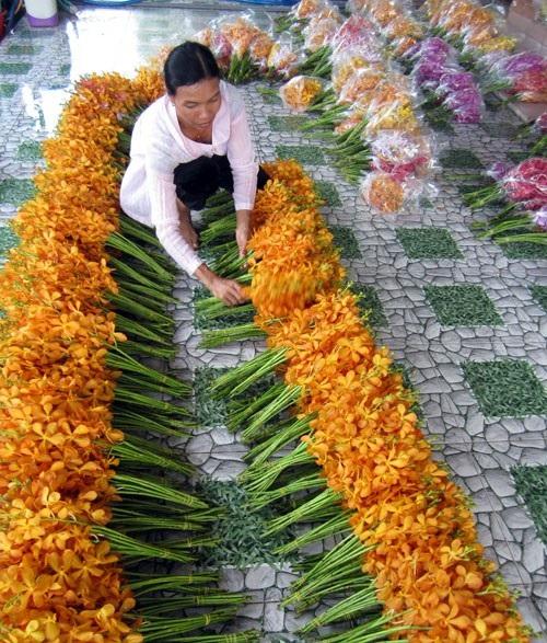 Công nhân đang phân loại, đóng gói hoa lan tại trang trại của chị Trinh. Ảnh: Hữu Quang