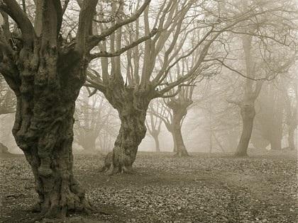 Những khu rừng ma ám nổi tiếng thế giới - 1