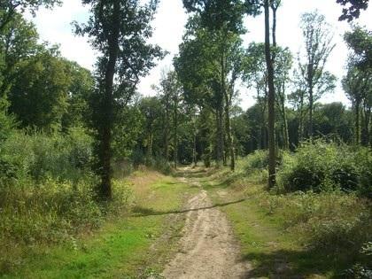 Những khu rừng ma ám nổi tiếng thế giới - 10