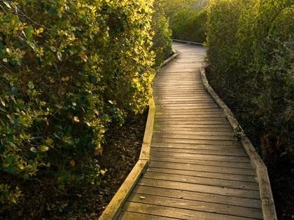 Những khu rừng ma ám nổi tiếng thế giới - 2