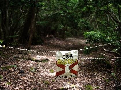 Những khu rừng ma ám nổi tiếng thế giới - 4