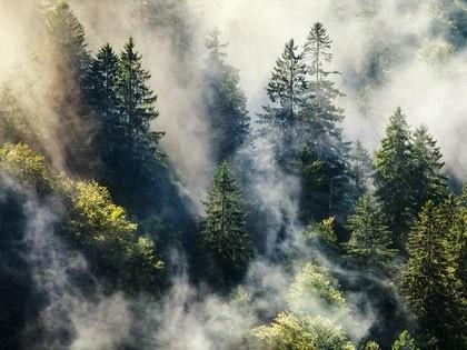 Những khu rừng ma ám nổi tiếng thế giới - 6