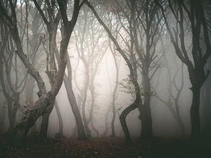 Những khu rừng ma ám nổi tiếng thế giới - 8