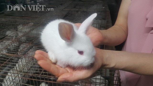 Nam Định: Nuôi gần 1 vạn thỏ, mỗi tháng lãi gần 100 triệu đồng - 4
