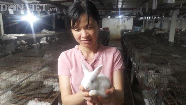 Chuồng nuôi thỏ rộng hơn 3000m2, được bố trí làm nhiều dãy chuồng khác nhau với hàng nghìn ô chuồng nuôi thỏ New Zealand của gia đình chị Thủy.