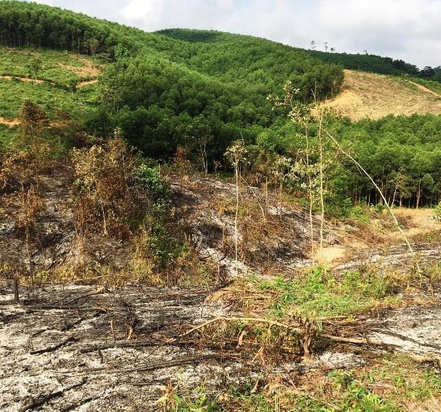 """Ban Quản lý rừng phòng hộ """"mập mờ"""" trong việc thu tiền khai thác rừng tập thể? - Ảnh 2."""