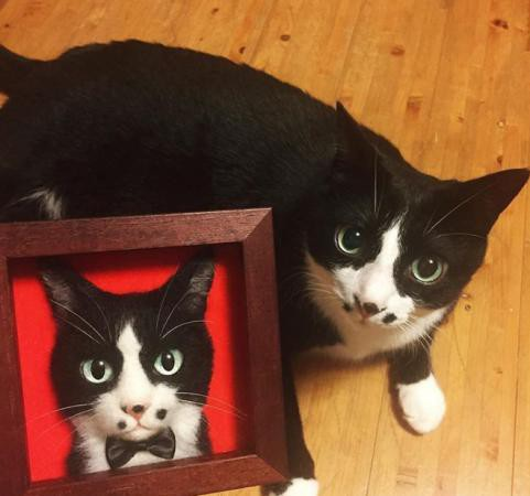 Mèo đen cũng trở thành người mẫu