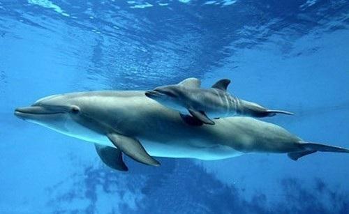Nghiên cứu về chế độ ăn của cá heo giúp ích cho việc bảo tồn - 1