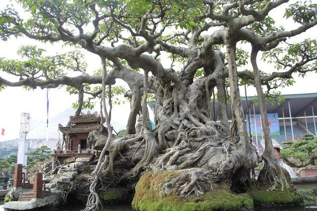 Tất cả các tiểu cảnh xung quanh cây đều được tự tay ông Khoa thực hiện
