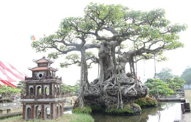 Bộ rễ cây khá độc đáo được đánh giá là đẹp hiếm có