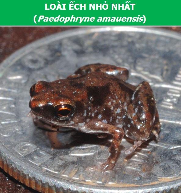 Chiêm ngưỡng thành viên nhỏ nhất của mỗi họ động vật trên thế giới - 1