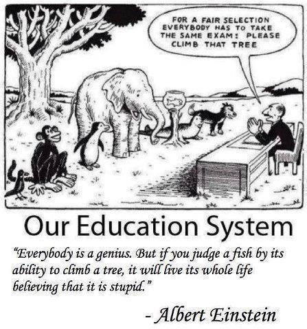 Mọi người đều là thiên tài. Nhưng nếu bạn đánh giá một con cá qua khả năng trèo cây, nó sẽ sống cả đời với niềm tin rằng nó ngu ngốc.