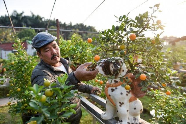 Theo chia sẻ của ông Xuân, chậu sứ hình chú chó đốm được ông đặt làm ở làng gốm Bát Tràng. Ông thực hiện ý tưởng này vì Tết năm nay là Tết Mậu Tuất, năm con chó. Hiện ông Xuân trồng 200 gốc quất bonsai các loại, trong đó chỉ có vài chục cây quất cảnh được trồng trong chậu hình chú chó đốm. Những cây quất bonsai đẹp có giá từ vài triệu đến cả chục triệu. Riêng chậu quất chú chó đốm này có giá khoảng 2 triệu đồng. Ảnh: Toàn Vũ