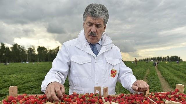 Ông Pavel Grudinin đi lên từ một nông dân trồng dâu tây bình thường tới vị trí ứng viên tổng thống của đảng Cộng sản Nga (Ảnh: Fort Russ)