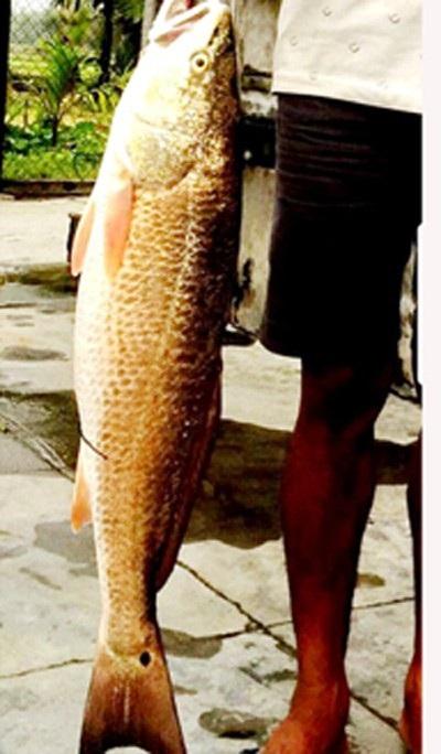 Ba lô 1,5 tỷ đồng mua con cá sủ vàng: Huyền thoại lộc trời - 1