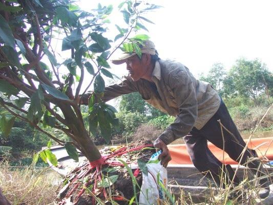 Anh Trương Văn Tài, quê Đồng Tháp, mấy năm gần đây, mỗi khi Tết đến đều tìm đến đây làm thuê. Mặc dù công việc rất cực, nhưng bù lại anh có thể kiếm tiền triệu mỗi ngày để đưa về quê giúp gia đình có một cái Tết no đủ.