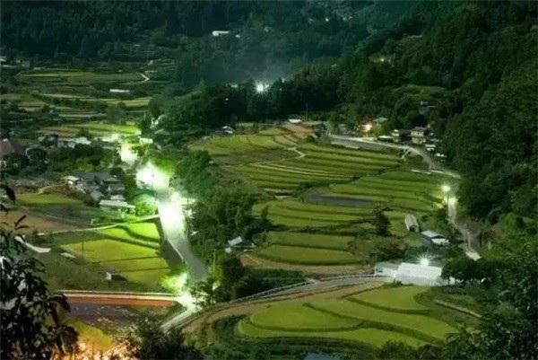 Nhờ bán...lá cây, các cụ bà Nhật Bản kiếm được 52 tỷ đồng/năm - 1