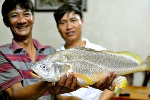 Ba lô 1,5 tỷ đồng mua con cá sủ vàng: Huyền thoại lộc trời - 3