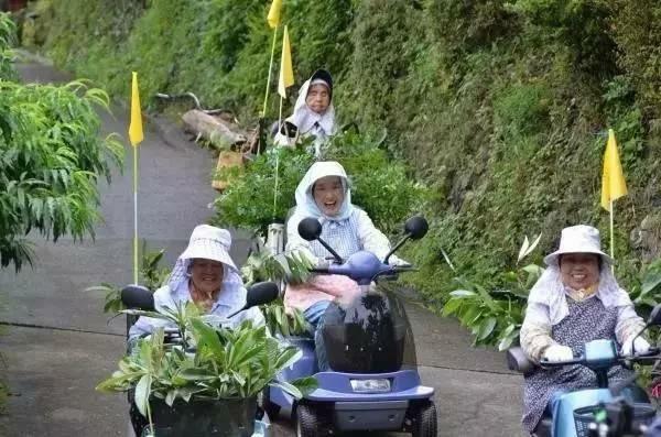Yokoishi phát động người dân trong thôn cùng thu thập lá cây, nêu rõ yêu cầu chất lượng, đồng thời trả thù lao cho từng người.
