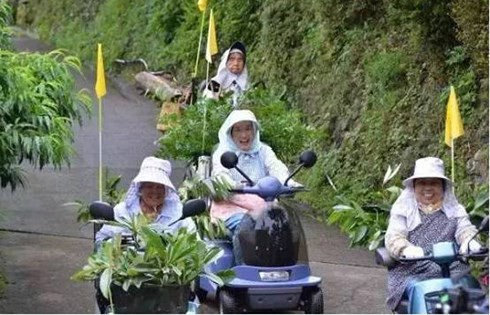 Các cụ già ở Kamikatsu rất hăng hái với nghề đi săn lá cây