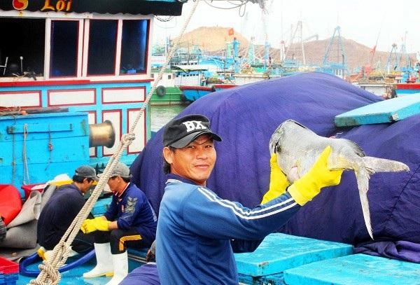 Đầu năm, ngư dân Bình Định trúng đậm cá ngừ sọc dưa, thu về tiền tỷ - 2