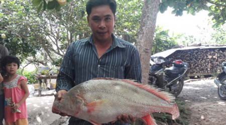Ba lô 1,5 tỷ đồng mua con cá sủ vàng: Huyền thoại lộc trời - 8
